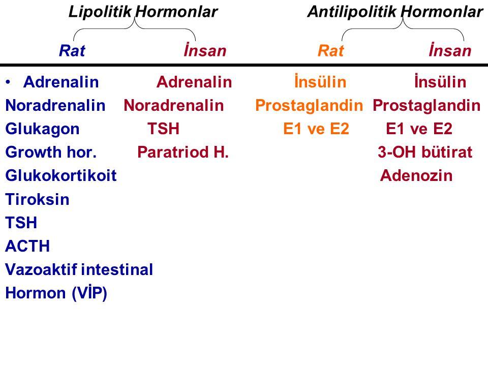 Adrenalin Adrenalin İnsülin İnsülin Noradrenalin Noradrenalin Prostaglandin Prostaglandin Glukagon TSH E1 ve E2 E1 ve E2 Growth hor. Paratriod H. 3-OH