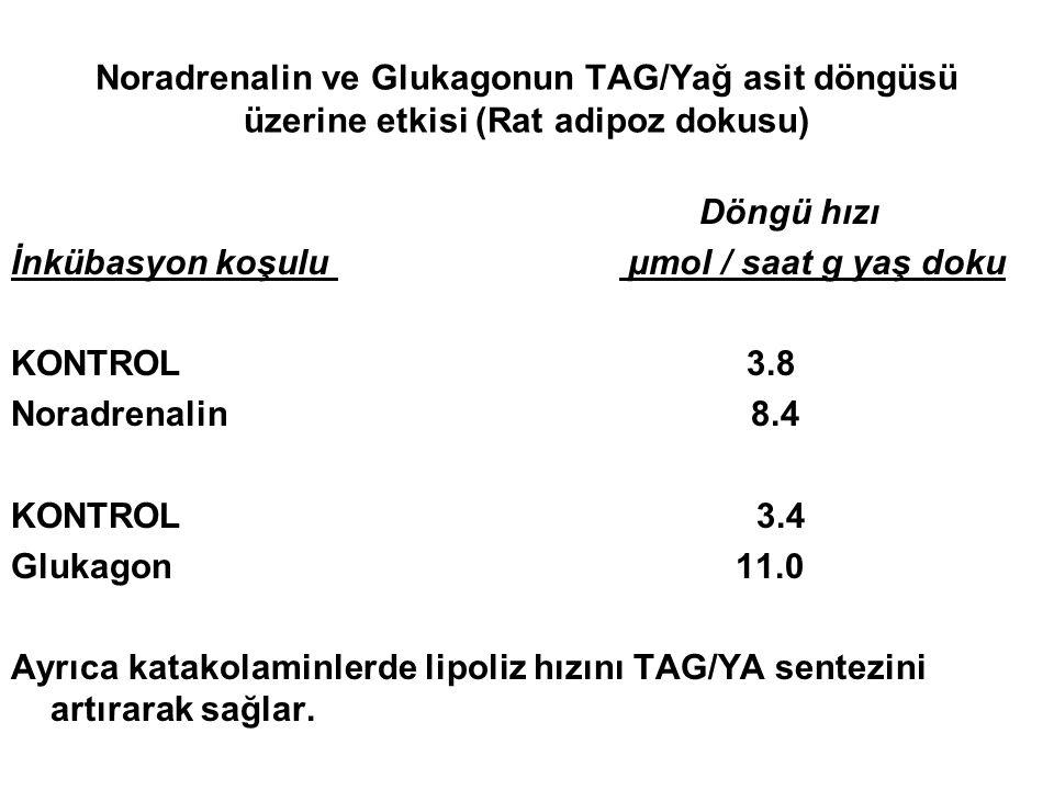 Noradrenalin ve Glukagonun TAG/Yağ asit döngüsü üzerine etkisi (Rat adipoz dokusu) Döngü hızı İnkübasyon koşulu µmol / saat g yaş doku KONTROL 3.8 Nor