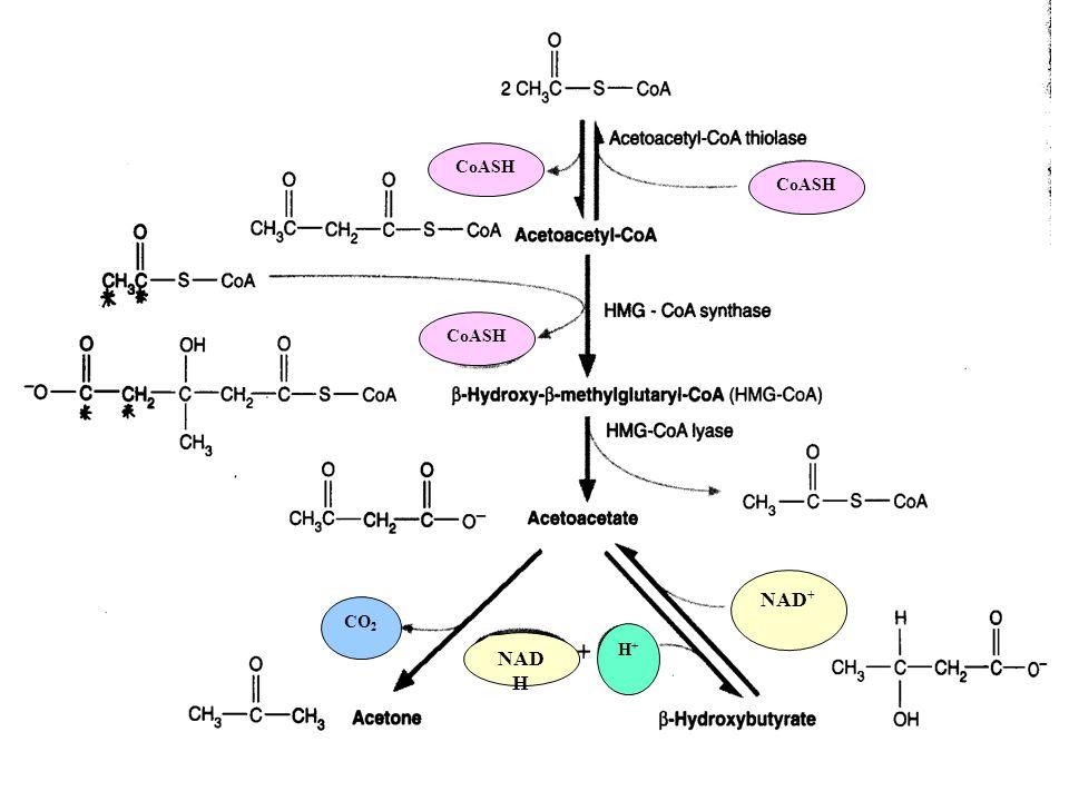 NAD H NAD + CO 2 CoASH H+H+