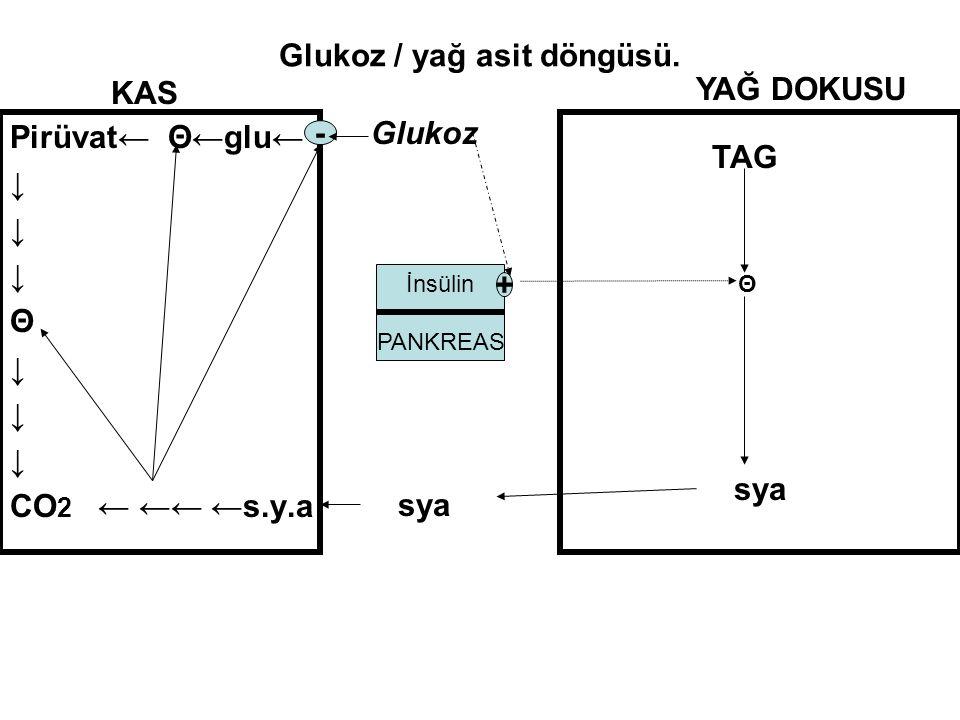 Glukoz / yağ asit döngüsü. Pirüvat← Θ←glu← ↓ Θ ↓ CO 2 ← ←← ←s.y.a - KAS Glukoz YAĞ DOKUSU TAG Θ sya İnsülin PANKREAS +