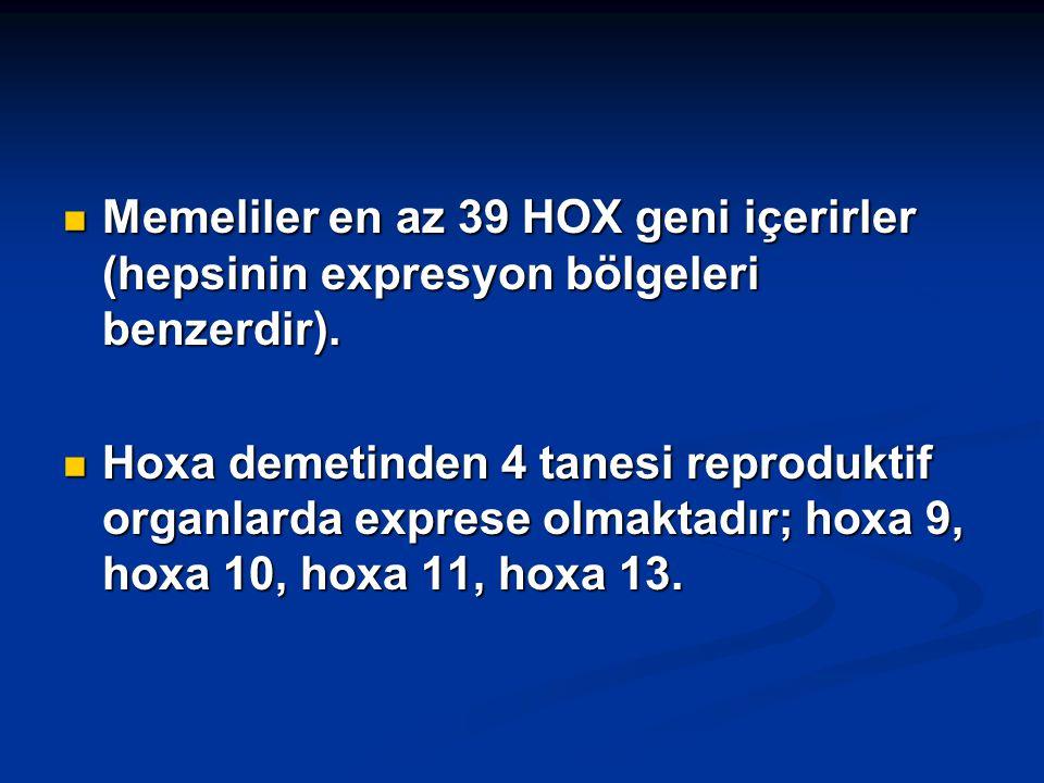 Memeliler en az 39 HOX geni içerirler (hepsinin expresyon bölgeleri benzerdir). Memeliler en az 39 HOX geni içerirler (hepsinin expresyon bölgeleri be