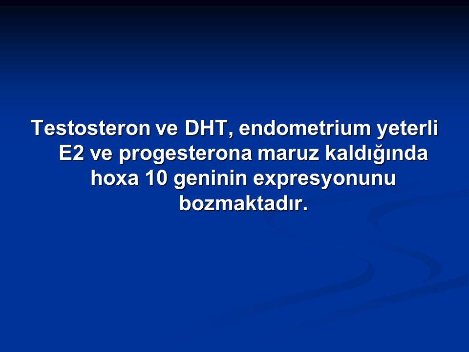 Testosteron ve DHT, endometrium yeterli E2 ve progesterona maruz kaldığında hoxa 10 geninin expresyonunu bozmaktadır.