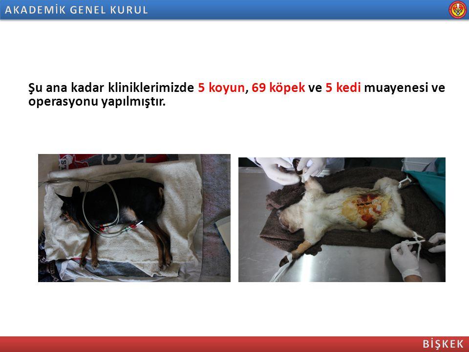 Şu ana kadar kliniklerimizde 5 koyun, 69 köpek ve 5 kedi muayenesi ve operasyonu yapılmıştır.