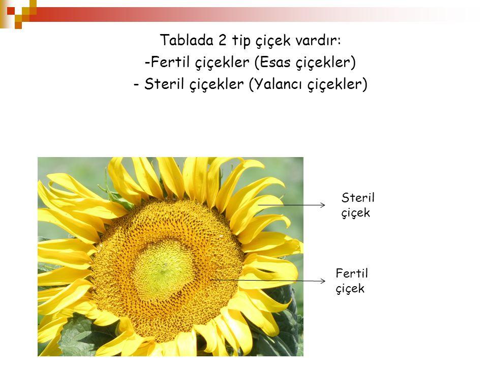 Tablada 2 tip çiçek vardır: -Fertil çiçekler (Esas çiçekler) - Steril çiçekler (Yalancı çiçekler) Steril çiçek Fertil çiçek