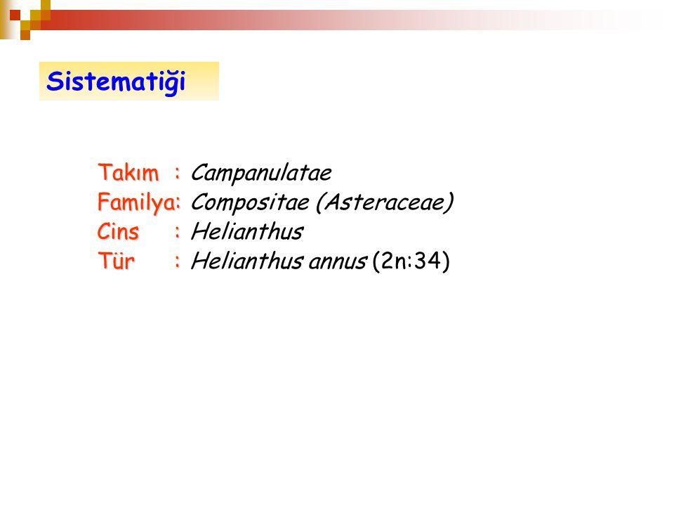 Takım: Takım:Campanulatae Familya: Familya: Compositae (Asteraceae) Cins: Cins: Helianthus Tür: Tür: Helianthus annus (2n:34) Sistematiği
