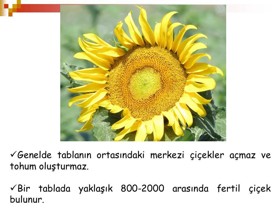 Genelde tablanın ortasındaki merkezi çiçekler açmaz ve tohum oluşturmaz. Bir tablada yaklaşık 800-2000 arasında fertil çiçek bulunur.