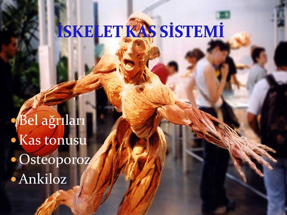 Bel ağrıları Kas tonusu Osteoporoz Ankiloz