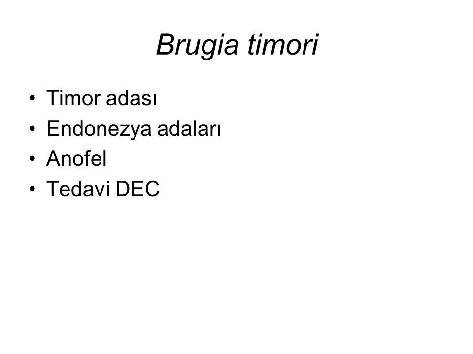 Brugia timori Timor adası Endonezya adaları Anofel Tedavi DEC