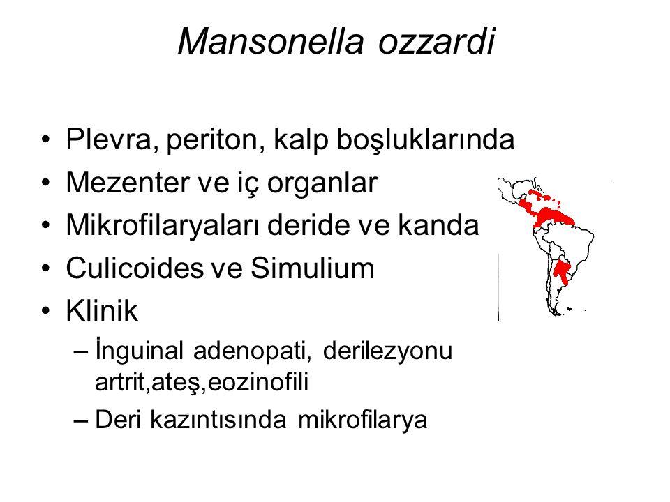 Mansonella ozzardi Plevra, periton, kalp boşluklarında Mezenter ve iç organlar Mikrofilaryaları deride ve kanda Culicoides ve Simulium Klinik –İnguina