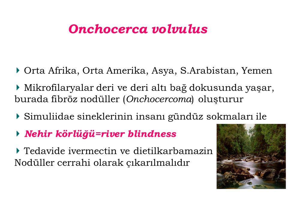 Orta Afrika, Orta Amerika, Asya, S.Arabistan, Yemen Mikrofilaryalar deri ve deri altı bağ dokusunda yaşar, burada fibröz nodüller ( Onchocercoma ) olu