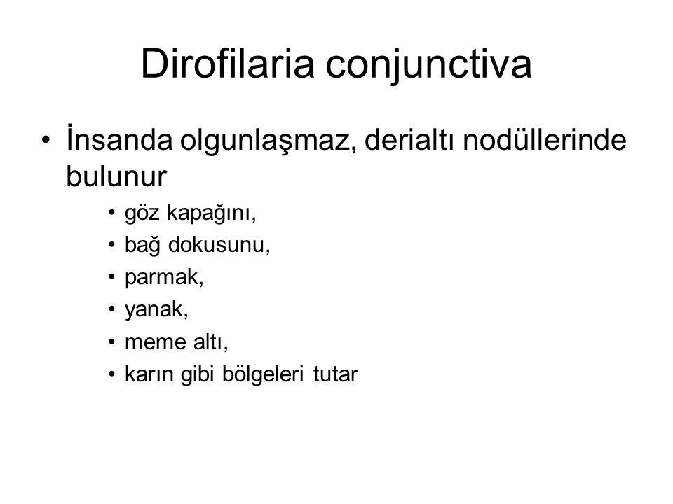 Dirofilaria conjunctiva İnsanda olgunlaşmaz, derialtı nodüllerinde bulunur göz kapağını, bağ dokusunu, parmak, yanak, meme altı, karın gibi bölgeleri