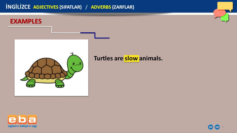 4 EXAMPLES Turtles are slow animals. İNGİLİZCE ADJECTIVES (SIFATLAR) / ADVERBS (ZARFLAR)