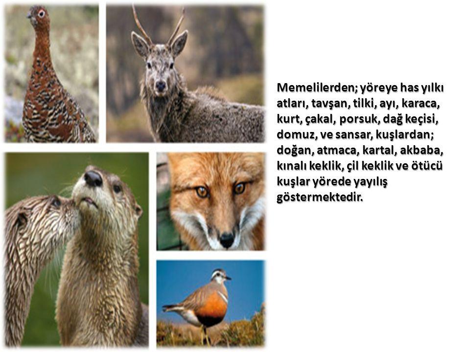 Memelilerden; yöreye has yılkı atları, tavşan, tilki, ayı, karaca, kurt, çakal, porsuk, dağ keçisi, domuz, ve sansar, kuşlardan; doğan, atmaca, kartal