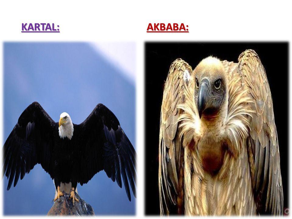 KARTAL:AKBABA: