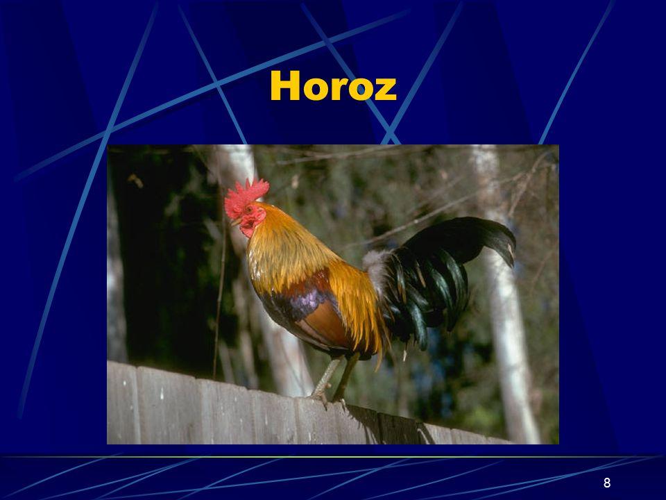 7 Kuşların Ortak Özellikleri Kuşlar, yumurta ile ürerler.Kuluçkaya yatarlar. Akciğer solunumu yaparlar. Sıcak kanlı hayvanlardır. Kalpleri dört gözlüd