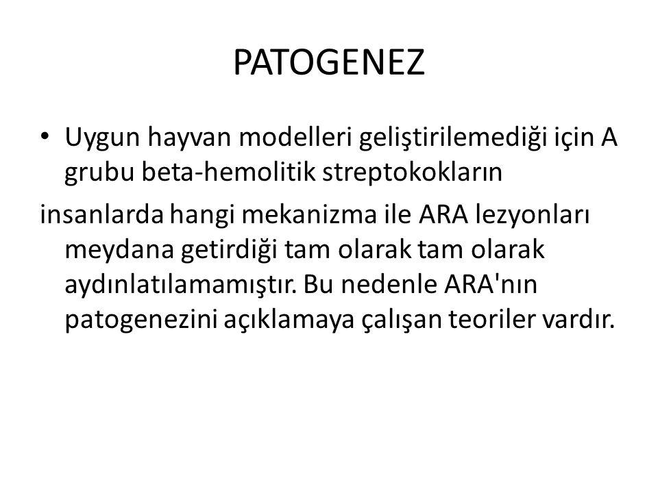 PATOGENEZ Uygun hayvan modelleri geliştirilemediği için A grubu beta-hemolitik streptokokların insanlarda hangi mekanizma ile ARA lezyonları meydana getirdiği tam olarak tam olarak aydınlatılamamıştır.