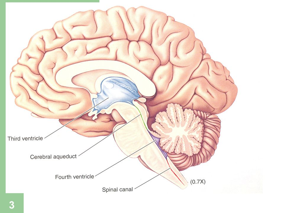 4 SANTRAL SİNİR SİSTEMİNİ ETKİLEYEN İLAÇLAR Santral sinir sistemi üzerinde etki yapan bir çok ilaç sinir hücresinin membran kanalları boyunca iyon akışını değiştirerek etki yapmaktadır.