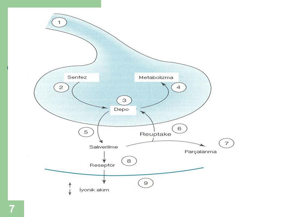 18 HİPNOSEDATİF İLAÇLAR GABA Reseptörü-Klorür Kanalı Kompleksi-4 BRBT bağlanma yeri (reseptörü) BRBT agonist X PİKROTOKSİNİN antagonist (Konvülsif) (Etil alkol ve steroid bağlanma yerleri de var)