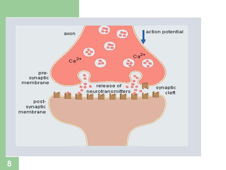 9 Santral Sinapslardaki Transmitterler Asetilkolin Dopamin Norepinefrin Serotonin Glutamik asid GABA ve glisin Peptid transmitterler ( beta-endorfin, metenkefalin, Löenkefalin, dinorfin)