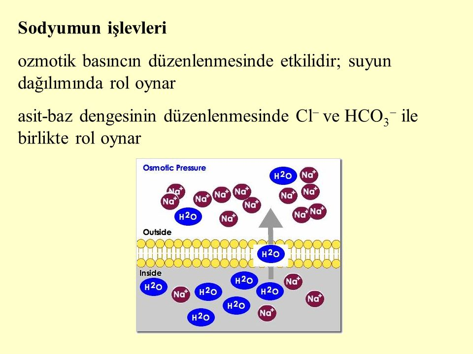 Sodyumun işlevleri ozmotik basıncın düzenlenmesinde etkilidir; suyun dağılımında rol oynar asit-baz dengesinin düzenlenmesinde Cl  ve HCO 3  ile bir