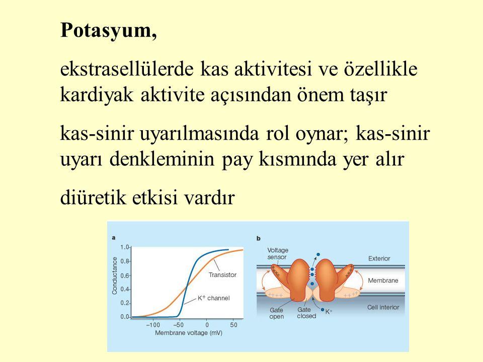 Potasyum, ekstrasellülerde kas aktivitesi ve özellikle kardiyak aktivite açısından önem taşır kas-sinir uyarılmasında rol oynar; kas-sinir uyarı denkl