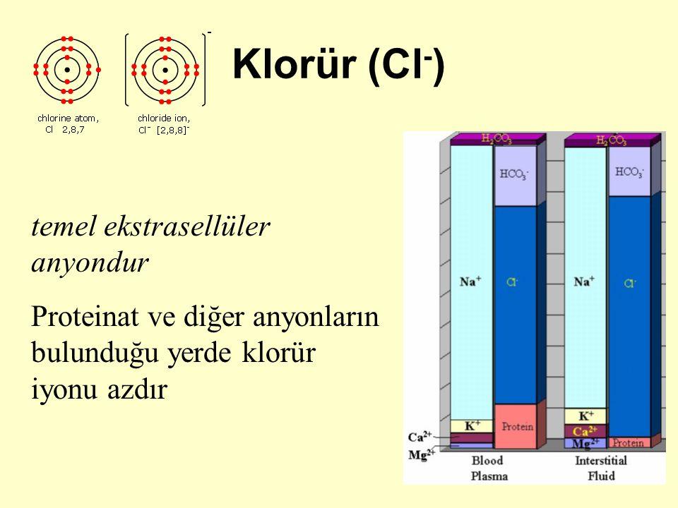 Klorür (Cl - ) temel ekstrasellüler anyondur Proteinat ve diğer anyonların bulunduğu yerde klorür iyonu azdır