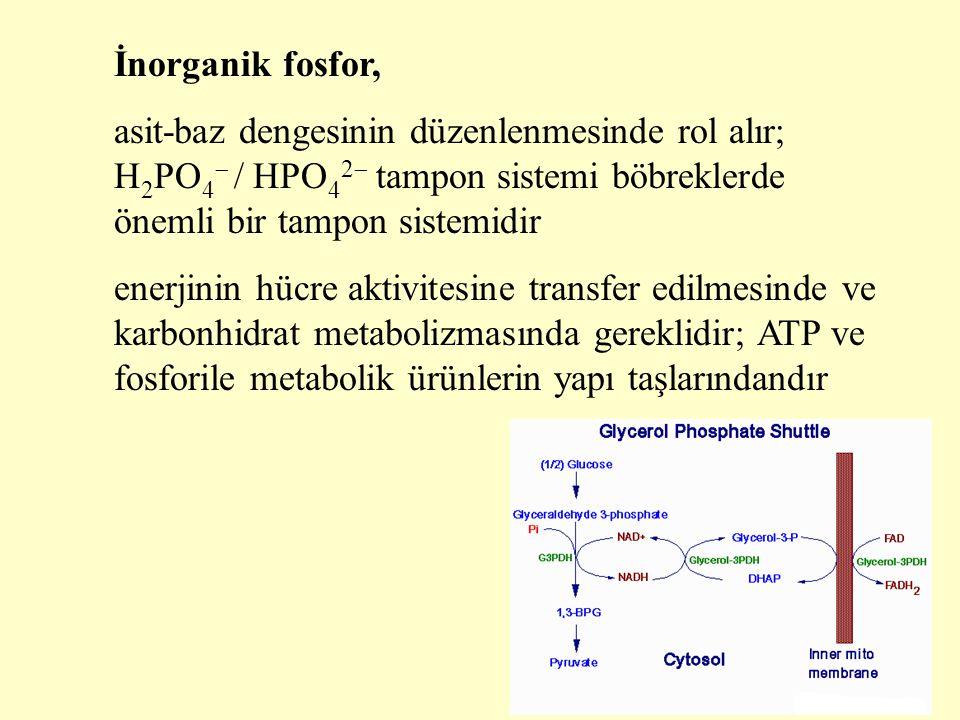 İnorganik fosfor, asit-baz dengesinin düzenlenmesinde rol alır; H 2 PO 4  / HPO 4 2  tampon sistemi böbreklerde önemli bir tampon sistemidir enerjin