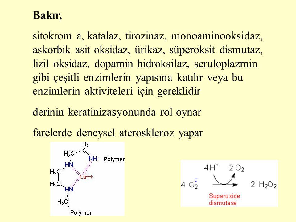 Bakır, sitokrom a, katalaz, tirozinaz, monoaminooksidaz, askorbik asit oksidaz, ürikaz, süperoksit dismutaz, lizil oksidaz, dopamin hidroksilaz, serul