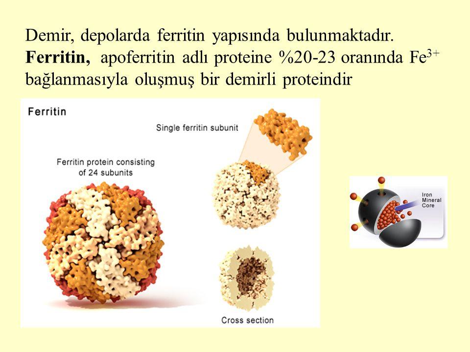 Demir, depolarda ferritin yapısında bulunmaktadır. Ferritin, apoferritin adlı proteine %20-23 oranında Fe 3+ bağlanmasıyla oluşmuş bir demirli protein