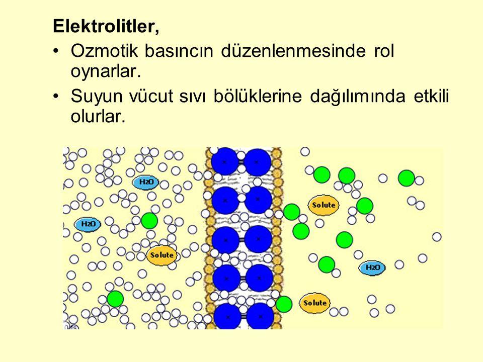 insanda serum magnezyum düzeyinin normal değeri 1,7-3,0 mg/dL Serum magnezyum düzeyinin normalden yüksek olması hipermagnezemi olarak tanımlanır Plazmada %5 mg üzerinde magnezyum bulunması anestezi yapar Serum magnezyum düzeyinin normalden düşük olması hipomagnezemi olarak tanımlanır