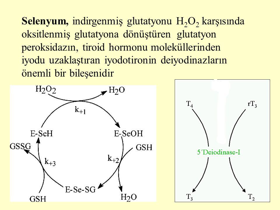 Selenyum, indirgenmiş glutatyonu H 2 O 2 karşısında oksitlenmiş glutatyona dönüştüren glutatyon peroksidazın, tiroid hormonu moleküllerinden iyodu uza