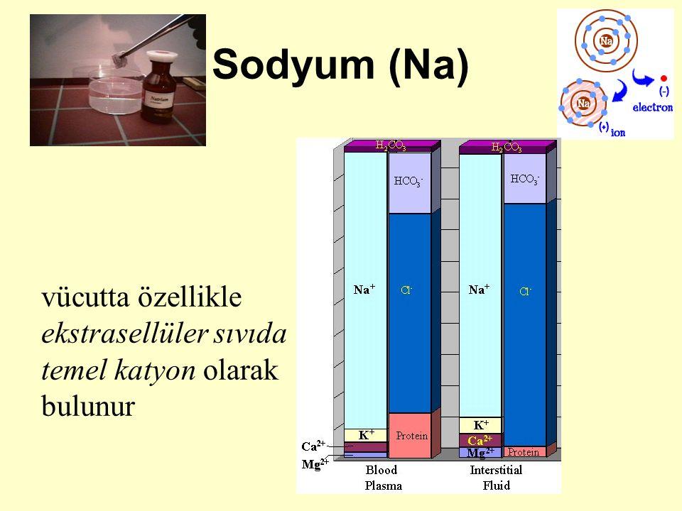Bakır, sitokrom a, katalaz, tirozinaz, monoaminooksidaz, askorbik asit oksidaz, ürikaz, süperoksit dismutaz, lizil oksidaz, dopamin hidroksilaz, seruloplazmin gibi çeşitli enzimlerin yapısına katılır veya bu enzimlerin aktiviteleri için gereklidir derinin keratinizasyonunda rol oynar farelerde deneysel ateroskleroz yapar