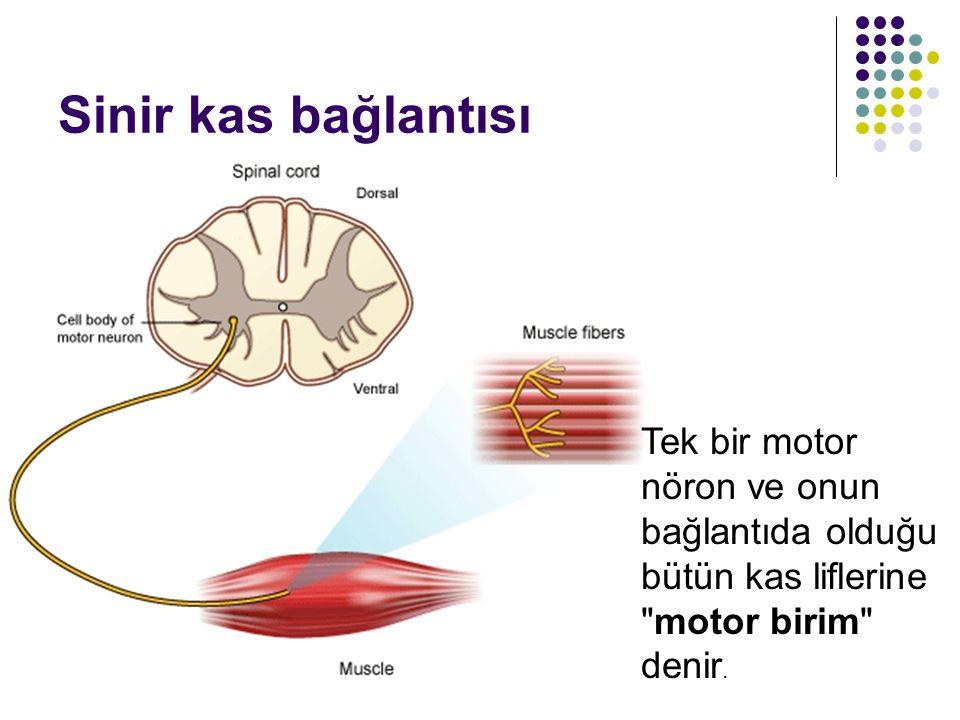 Sinir Şeritleri