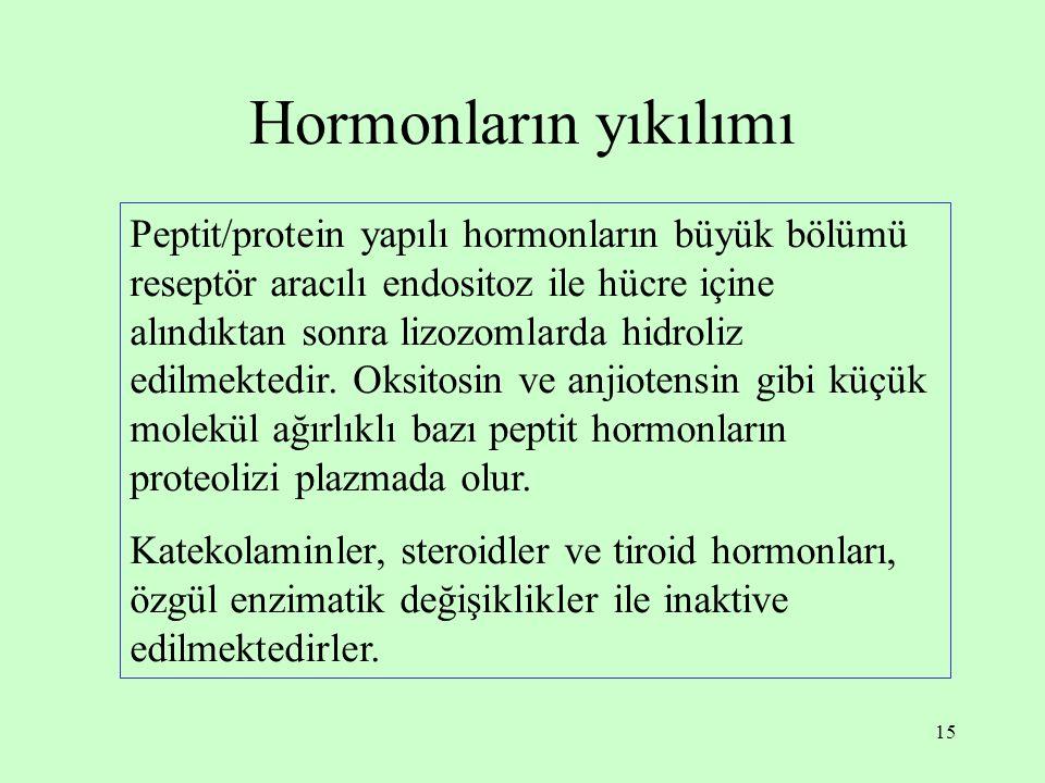 15 Hormonların yıkılımı Peptit/protein yapılı hormonların büyük bölümü reseptör aracılı endositoz ile hücre içine alındıktan sonra lizozomlarda hidrol