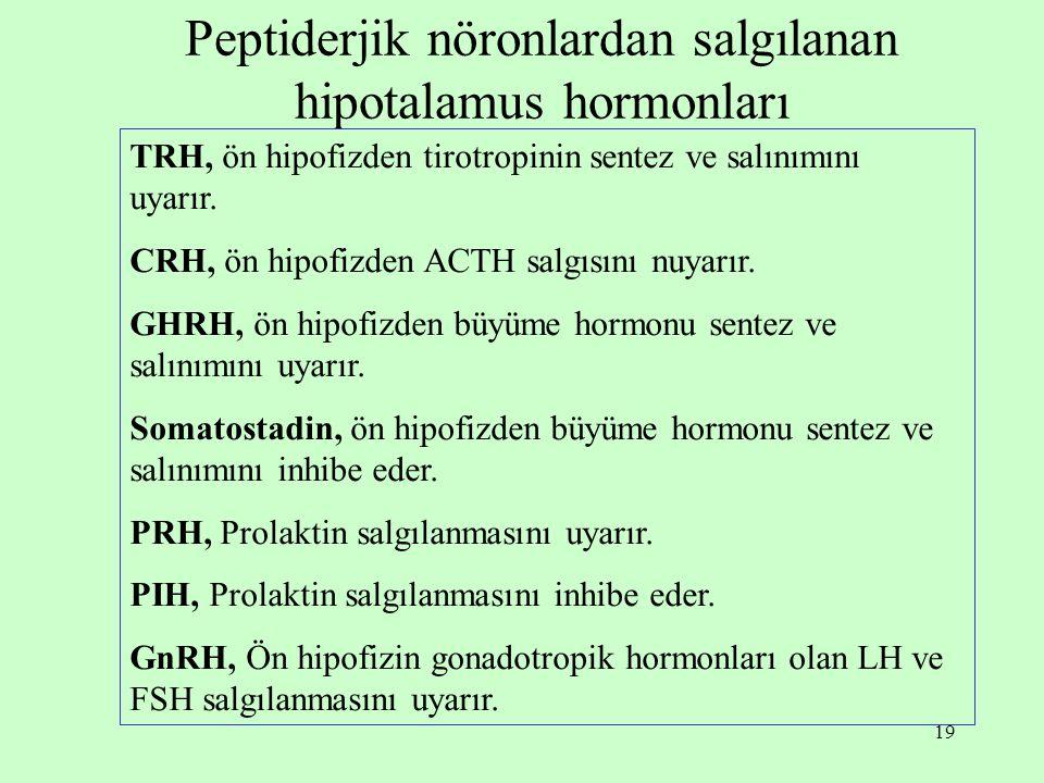 19 Peptiderjik nöronlardan salgılanan hipotalamus hormonları TRH, ön hipofizden tirotropinin sentez ve salınımını uyarır. CRH, ön hipofizden ACTH salg