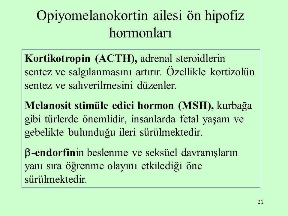 21 Opiyomelanokortin ailesi ön hipofiz hormonları Kortikotropin (ACTH), adrenal steroidlerin sentez ve salgılanmasını artırır. Özellikle kortizolün se
