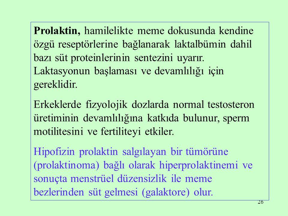 26 Prolaktin, hamilelikte meme dokusunda kendine özgü reseptörlerine bağlanarak laktalbümin dahil bazı süt proteinlerinin sentezini uyarır. Laktasyonu