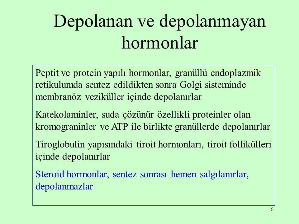6 Depolanan ve depolanmayan hormonlar Peptit ve protein yapılı hormonlar, granüllü endoplazmik retikulumda sentez edildikten sonra Golgi sisteminde me