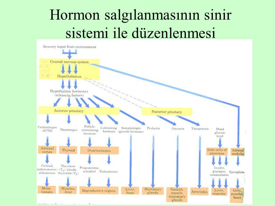 9 Hormon salgılanmasının kandaki kimyasal maddelerle düzenlenmesi Plazma Ca 2+ düzeyi PARATİROİT PTH Plazma glukoz düzeyi Pankreas adacık  hücreleri İnsülin