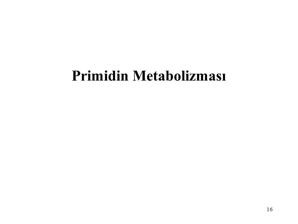 16 Primidin Metabolizması