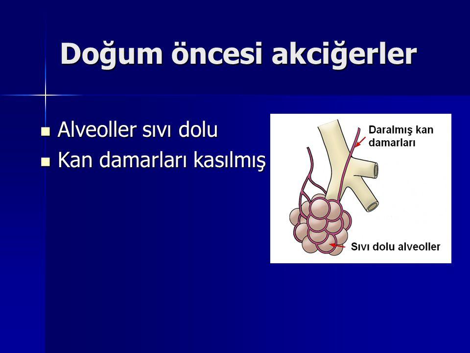 Doğum öncesi akciğerler Alveoller sıvı dolu Alveoller sıvı dolu Kan damarları kasılmış Kan damarları kasılmış