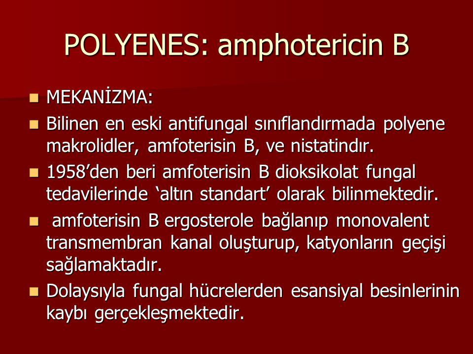 POLYENES: amphotericin B MEKANİZMA: MEKANİZMA: Bilinen en eski antifungal sınıflandırmada polyene makrolidler, amfoterisin B, ve nistatindır.