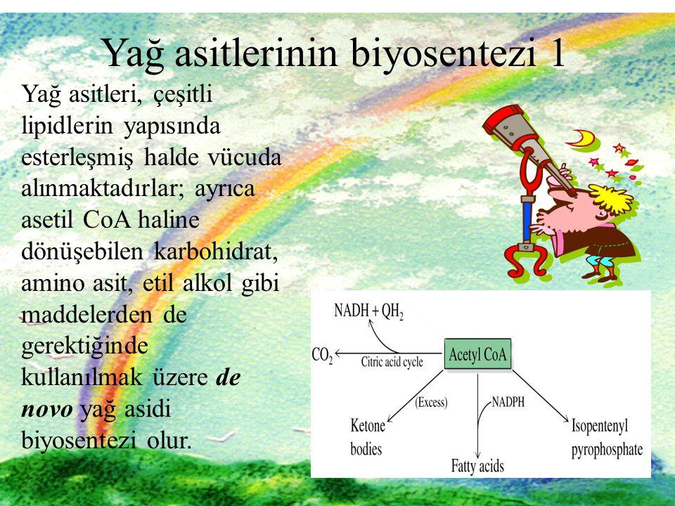 1 1 Yağ asitlerinin biyosentezi 1 Yağ asitleri, çeşitli lipidlerin yapısında esterleşmiş halde vücuda alınmaktadırlar; ayrıca asetil CoA haline dönüşebilen karbohidrat, amino asit, etil alkol gibi maddelerden de gerektiğinde kullanılmak üzere de novo yağ asidi biyosentezi olur.
