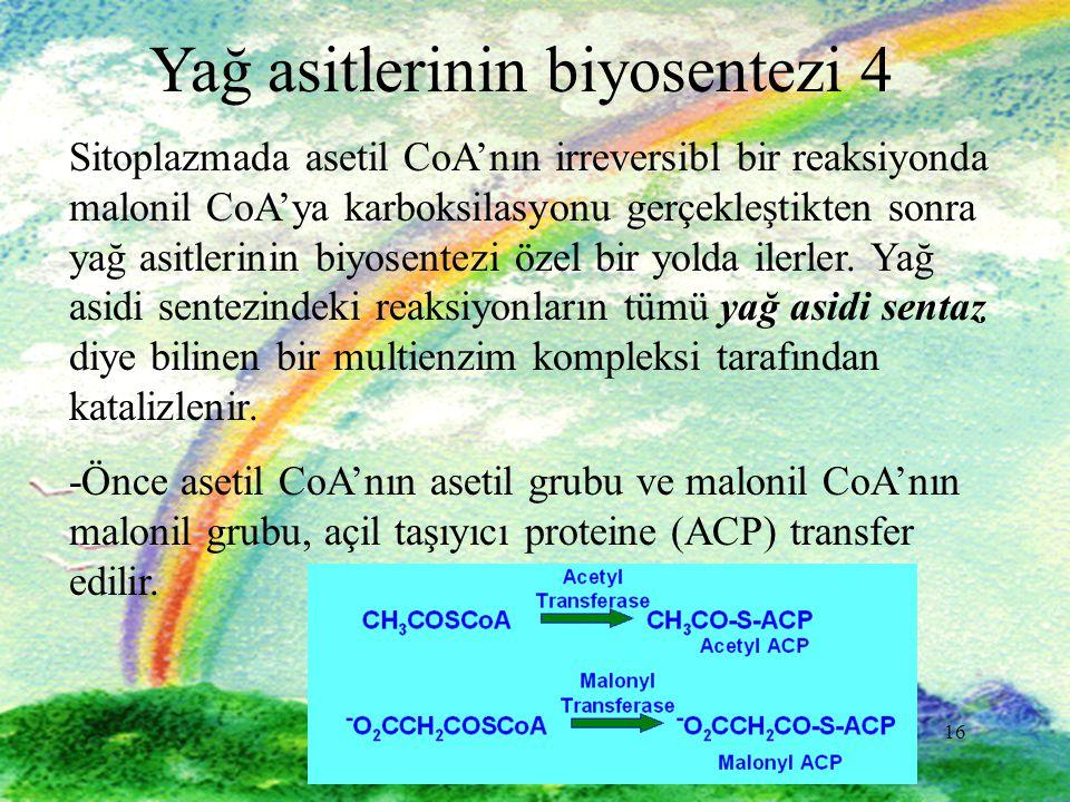16 Yağ asitlerinin biyosentezi 4 Sitoplazmada asetil CoA'nın irreversibl bir reaksiyonda malonil CoA'ya karboksilasyonu gerçekleştikten sonra yağ asitlerinin biyosentezi özel bir yolda ilerler.