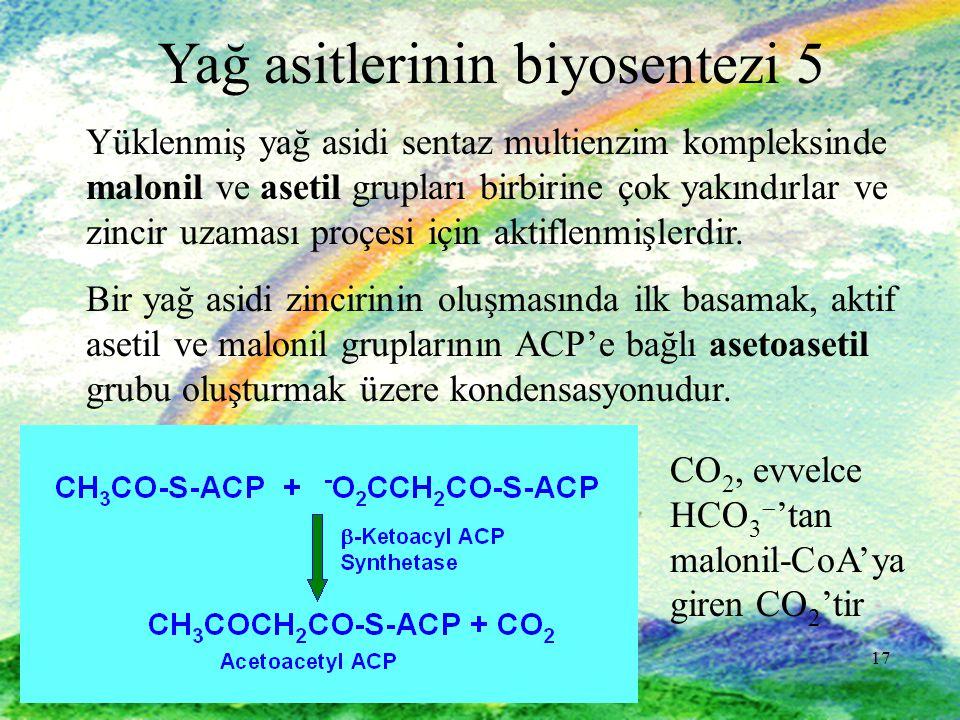 17 Yağ asitlerinin biyosentezi 5 Yüklenmiş yağ asidi sentaz multienzim kompleksinde malonil ve asetil grupları birbirine çok yakındırlar ve zincir uzaması proçesi için aktiflenmişlerdir.