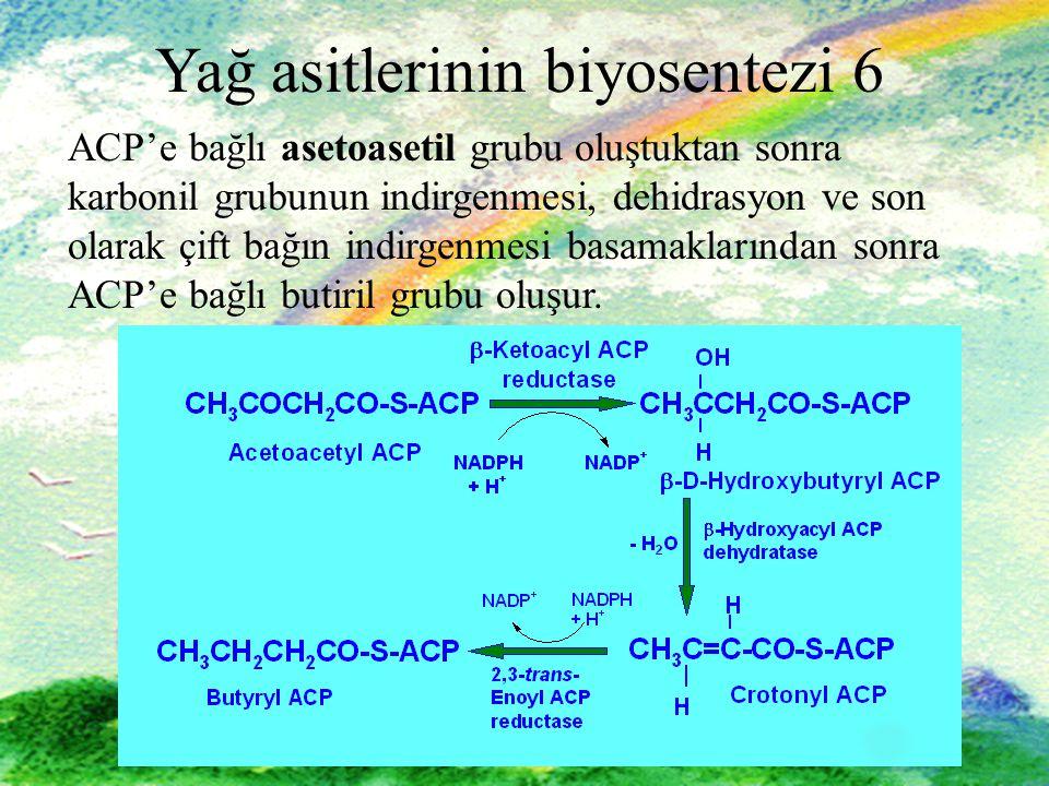 18 Yağ asitlerinin biyosentezi 6 ACP'e bağlı asetoasetil grubu oluştuktan sonra karbonil grubunun indirgenmesi, dehidrasyon ve son olarak çift bağın indirgenmesi basamaklarından sonra ACP'e bağlı butiril grubu oluşur.