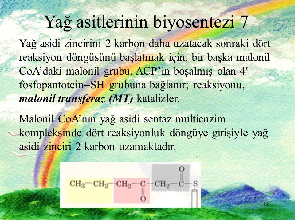 19 Yağ asitlerinin biyosentezi 7 Yağ asidi zincirini 2 karbon daha uzatacak sonraki dört reaksiyon döngüsünü başlatmak için, bir başka malonil CoA'daki malonil grubu, ACP'in boşalmış olan 4- fosfopantotein  SH grubuna bağlanır; reaksiyonu, malonil transferaz (MT) katalizler.