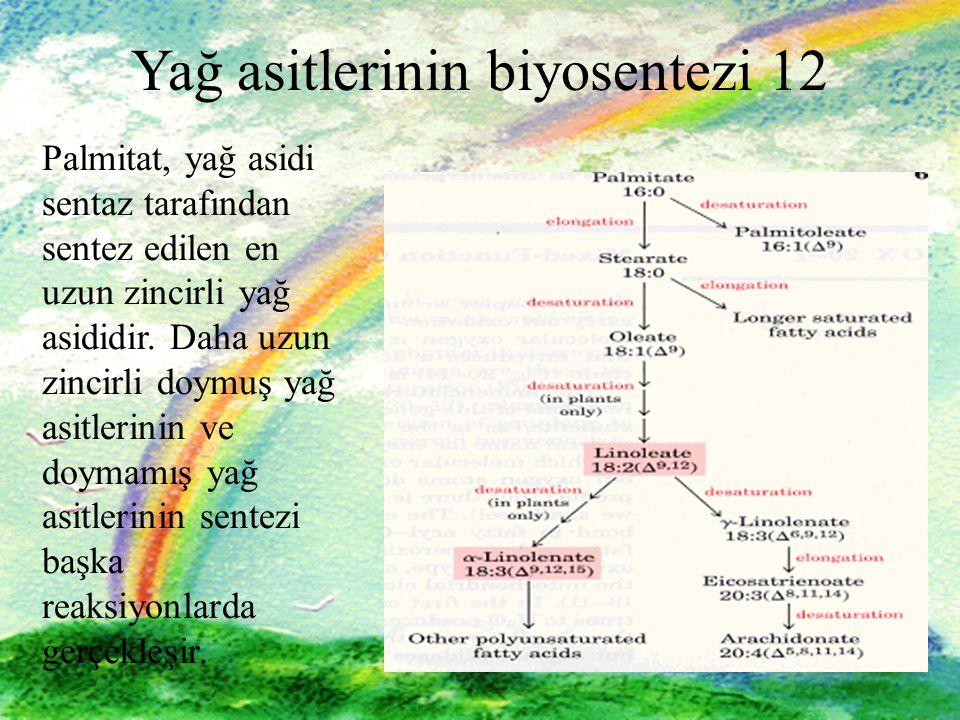 29 Yağ asitlerinin biyosentezi 12 Palmitat, yağ asidi sentaz tarafından sentez edilen en uzun zincirli yağ asididir.