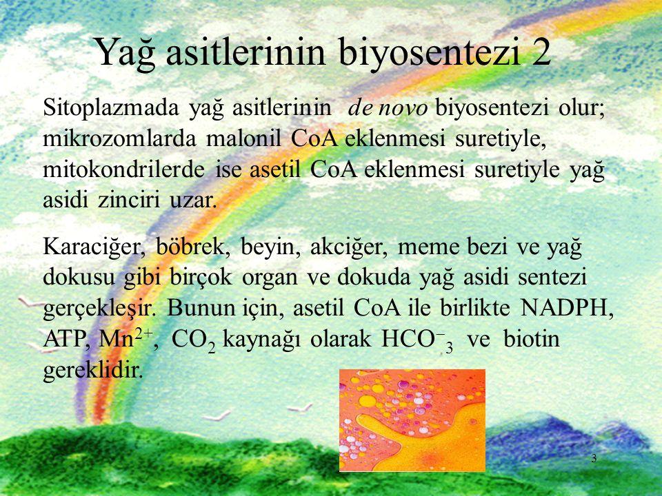3 3 Yağ asitlerinin biyosentezi 2 Sitoplazmada yağ asitlerinin de novo biyosentezi olur; mikrozomlarda malonil CoA eklenmesi suretiyle, mitokondrilerde ise asetil CoA eklenmesi suretiyle yağ asidi zinciri uzar.
