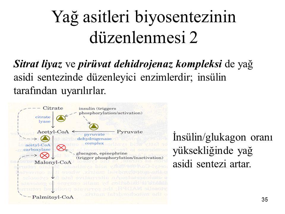 35 Yağ asitleri biyosentezinin düzenlenmesi 2 Sitrat liyaz ve pirüvat dehidrojenaz kompleksi de yağ asidi sentezinde düzenleyici enzimlerdir; insülin tarafından uyarılırlar.